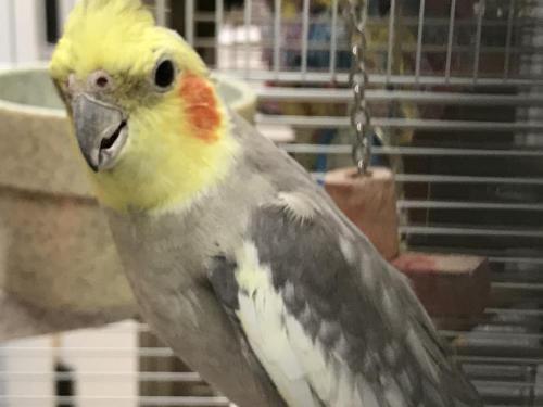 resize-bird3
