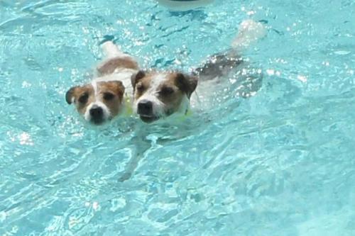 resort-pool-26
